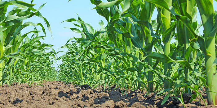 Investing in Crop Production