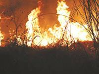 AgriSuite-Veld-Fire-Warnings-For-Livestock-Owners