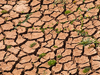 Impact of Drought on Agriculture