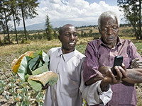 Mobile-money and Agriculture: Opportunities in Africa