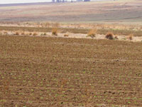Using Extension Suite Online to determine crop feasibility